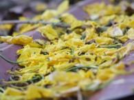 Hoa Rụng Sân Chùa